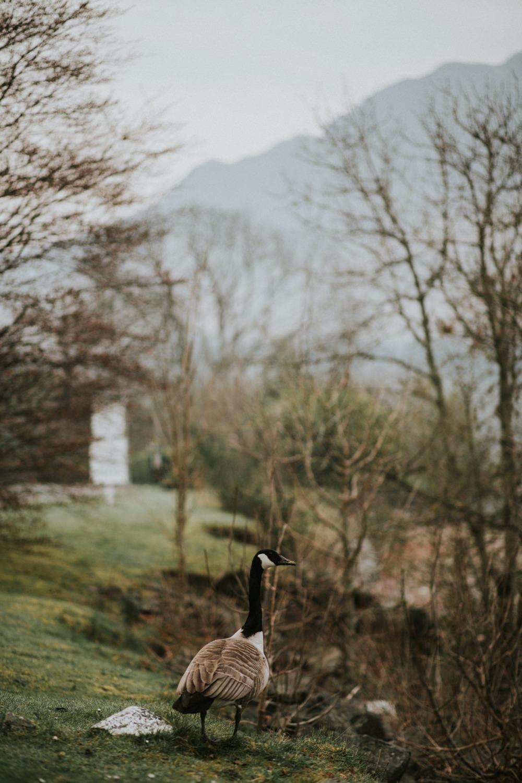 Scottish landscape photographer, Scotland landscape photography, Scotland wedding photographer, UK wedding photographer, wedding photography Scotland, Scotland landscape photography, Scottish wedding photographer, wedding photographer central Scotland, vow renewal Scotland, photographers Scotland, Isle of Skye wedding photographer, Loch Earn