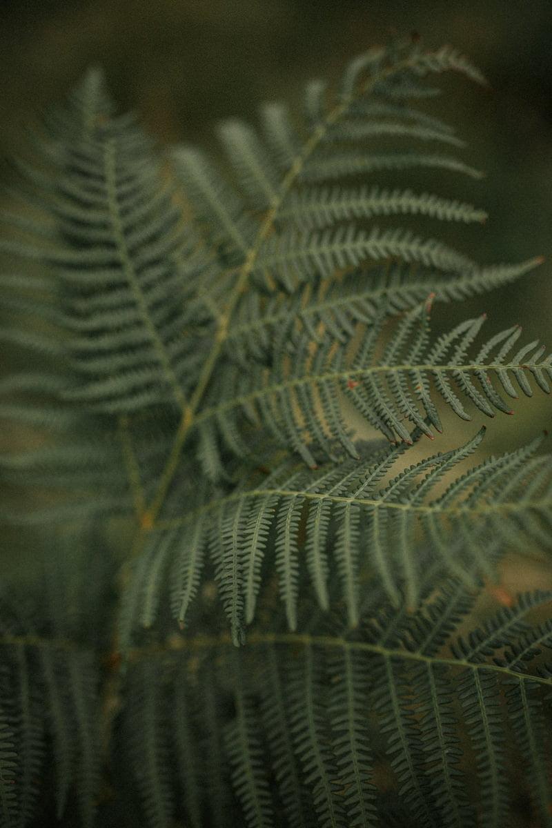 Clova couple session, autumn in Scotland, autumn in Cairngorms National Park, autumn in Glen Clova, fern