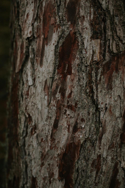 Killiecrankie, Killiecrankie Scotland, Killiecrankie Pitlochry, Pitlochry, Perthshire Weddings, Perthshire wedding photographer, Perthshire photography, Perthshire photos, Perthshire landscape photographer, Perthshire, @cathistle_, autumn Perthshire, autumn Killiecrankie