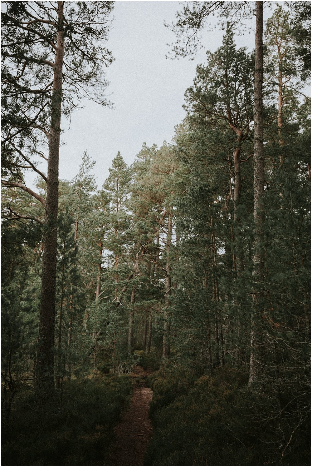 Scotland Elopement Photographer, Loch Garten